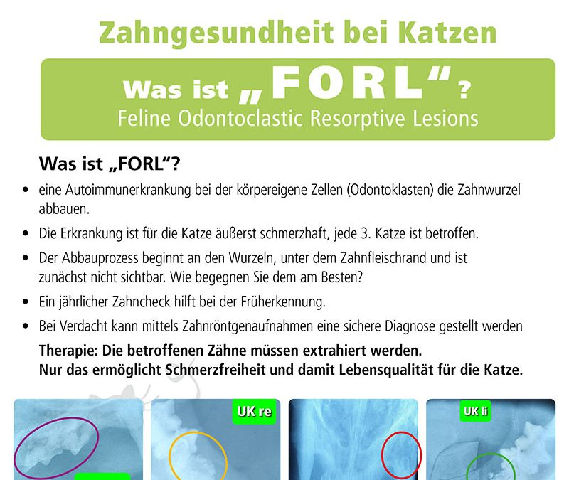 FORL+++ PraxisInfo +++ Was ist FORL?